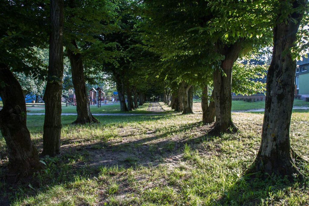 Aleja grabowa fragment zabytkowego założenia parkowego w Rejowcu Fabrycznym