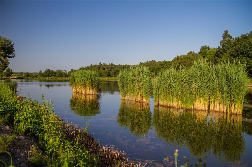 Gmina Rejowiec