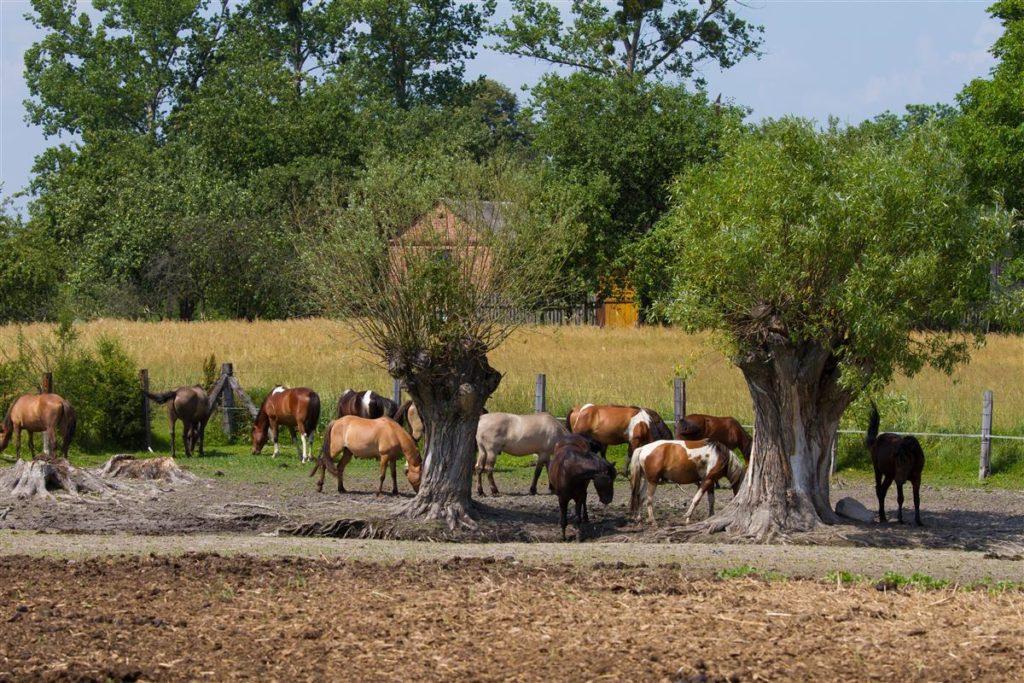 Ośrodek hodowlano-jezdziecki w Bukowie Małej