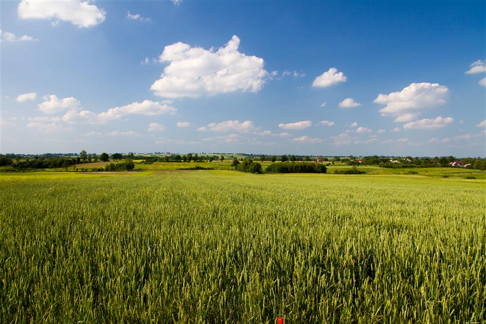 Panorama Gminy Rejowiec Fabryczny